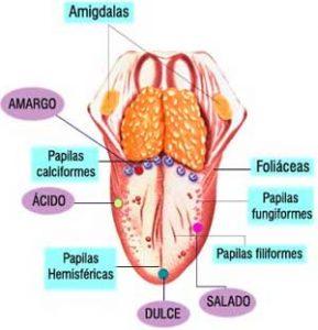 lengua-indicador-salud-1
